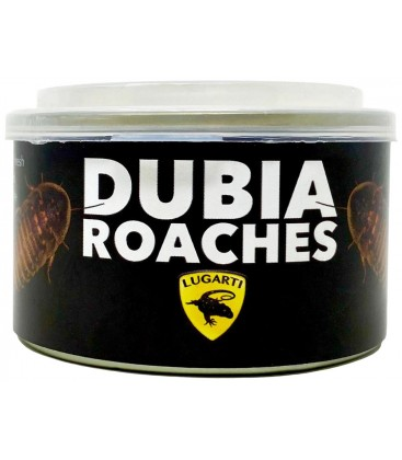Canned Dubia Roaches