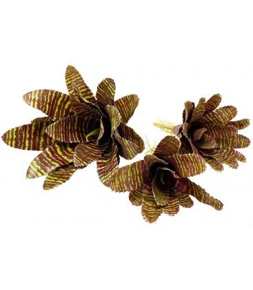 Bromeliad - Red Chestnut