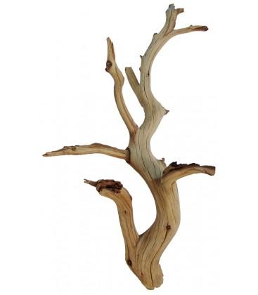 Exotic Manzanita