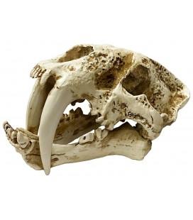 Naturalistic Skull - Saber-tooth