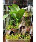 Tarantula Enclosure - Arboreal
